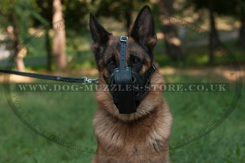 German Shepherd Dog Training Muzzle