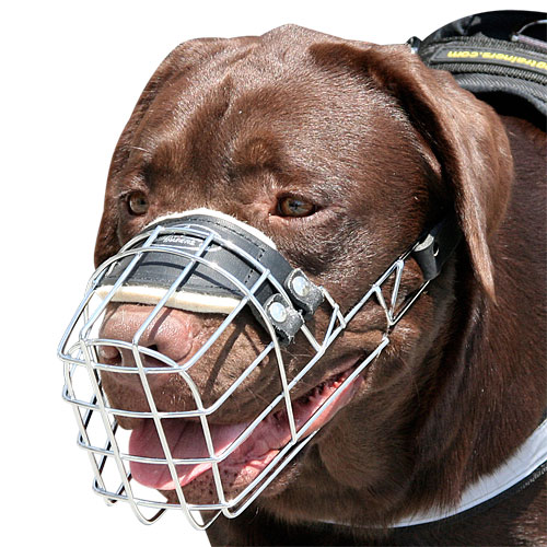 labrador dog muzzle that allows drinking