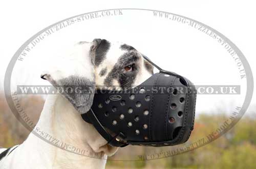Strong Thick Leather Dog Muzzle for Attack Training