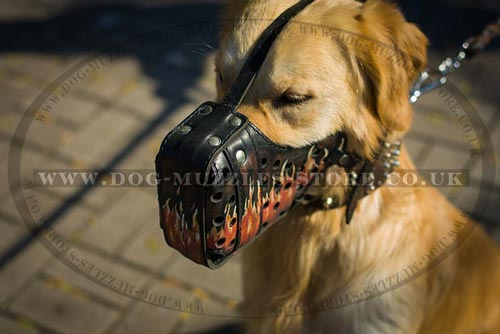 Leather Dog Muzzle for Golden  Retrievers