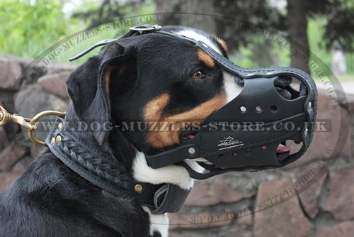 Leather Dog Muzzle for Swiss Mountain Dog