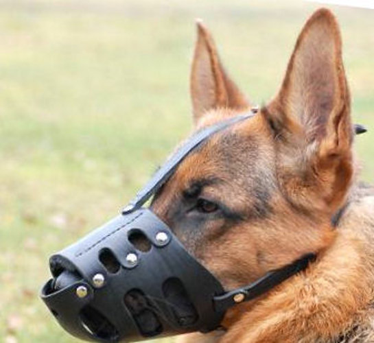muzzles for dogs with long snout reliable and soft leather