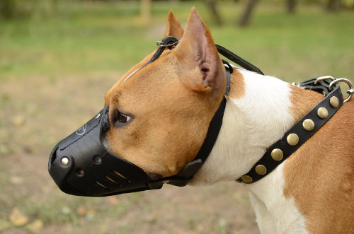 Leather Muzzle for Dog Training