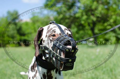 Padded Dog Muzzle for Dalmatian