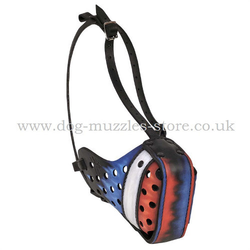 Painted Dog Muzzle UK