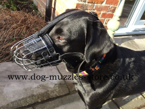 The Best Dog Muzzle for Labrador
