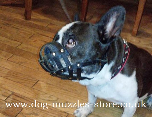 French Bulldog Muzzle UK