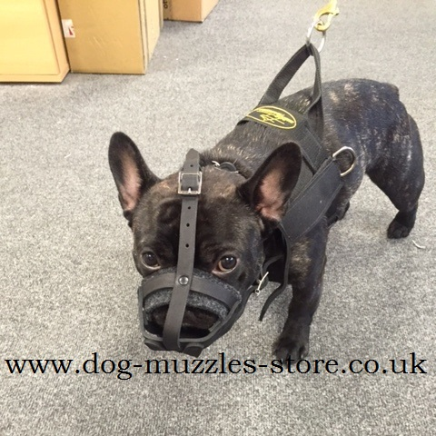 French Bulldog Basket Muzzle