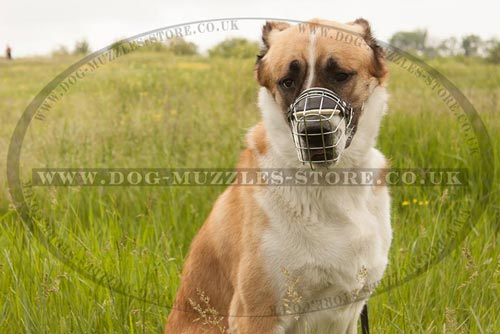 Central Asian Shepherd Dog Muzzle that Allows Drinking