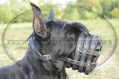 Giant Schnauzer Muzzle for Dogs