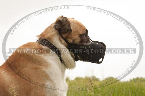 Big Dog Muzzle for Central Asian Shepherd Dog Size