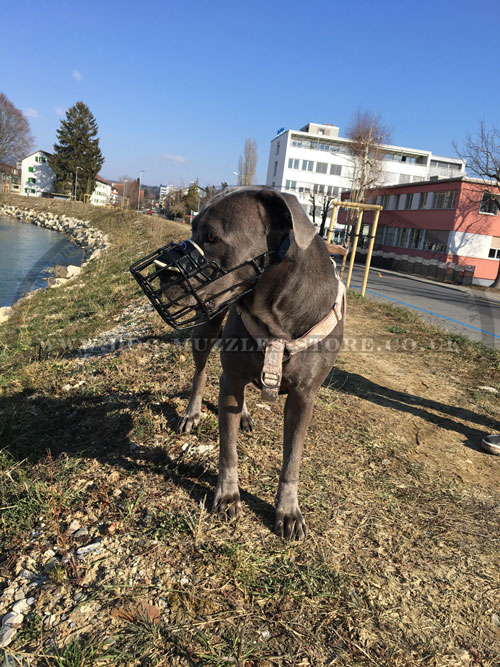 Cane Corso Muzzle for Dogs