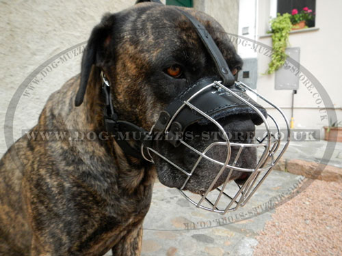 Basket Dog Muzzle for Cane Corso