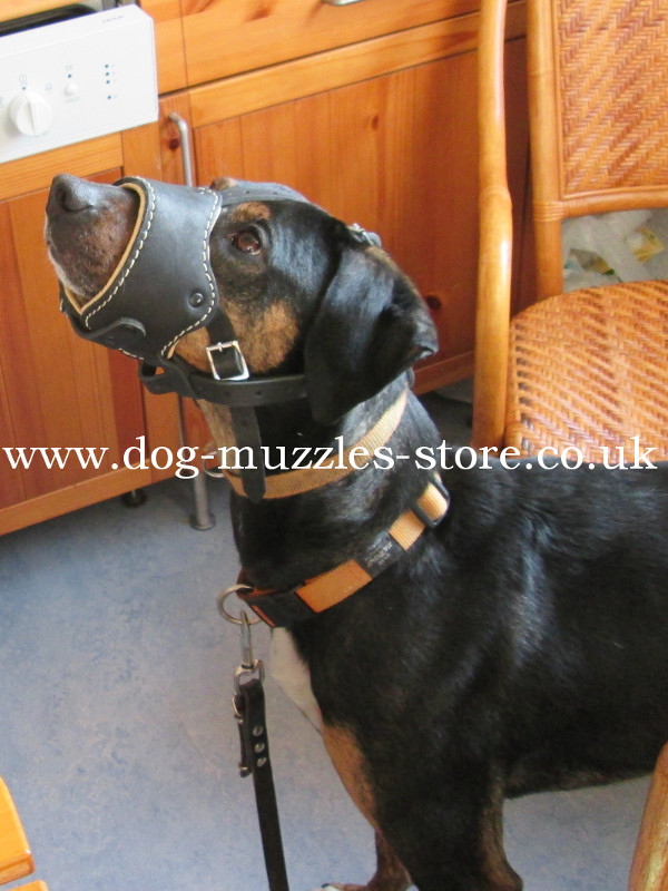 Leather Muzzle for Dog for sale