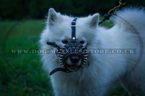 spiked dog muzzle buy online UK