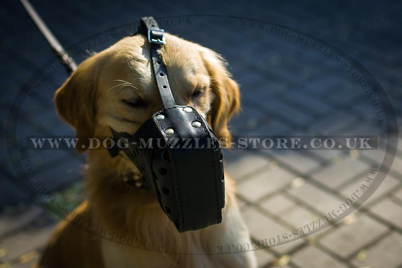 how to stop golden retriever from biting