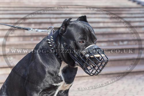 Wire Dog Muzzle for Cane Corso