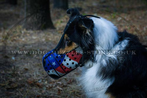 Painted Dog Muzzle for Collie Dog