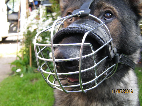 Basket Muzzles for Dogs UK
