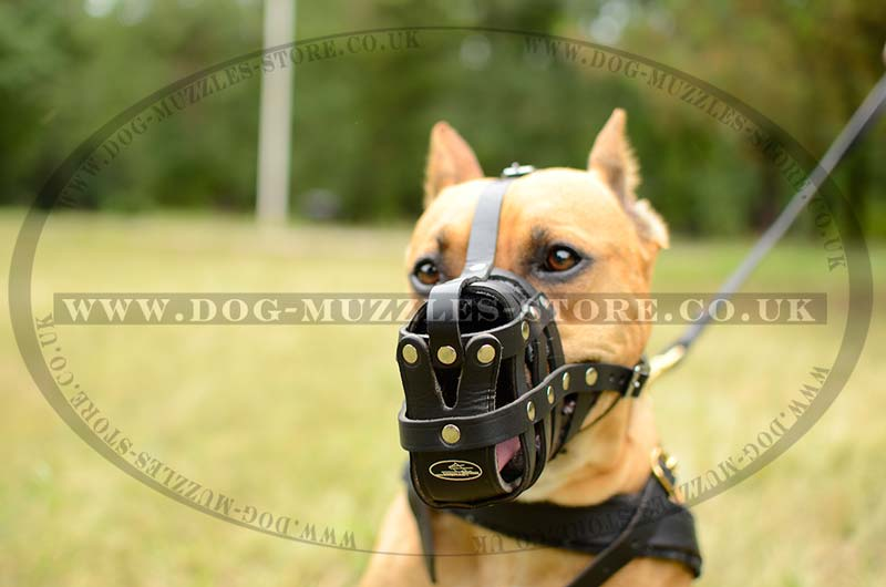 Leather Basket Muzzle For Pitbull