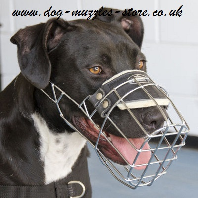 most humane dog muzzle for Pitbull