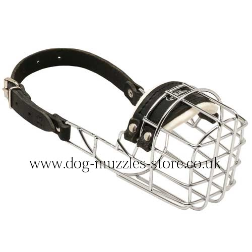 Poodle Muzzle - Dog Muzzles That Allow Drinking