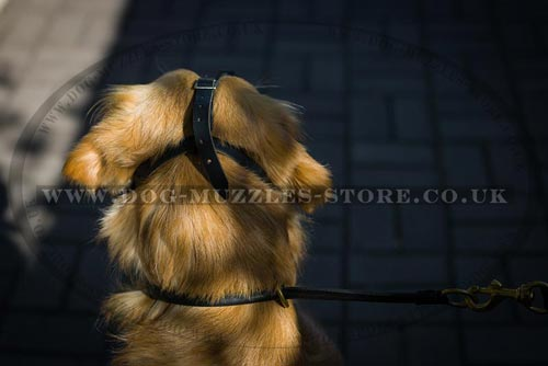 Leather Dog Muzzle for Golden Retriever