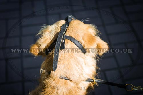 Soft Dog Muzzle UK