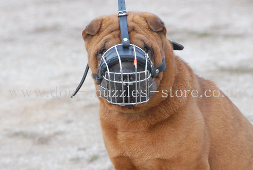 Chinese Shar Pei Muzzle UK