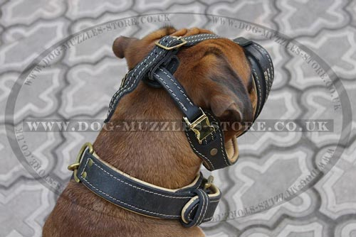 Short Nose Muzzle for Boxer Dog Breed