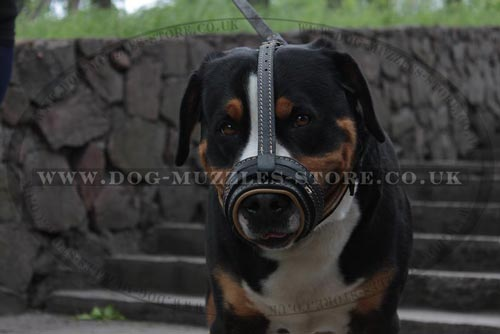 Swiss Mountain Dog Loop Muzzle