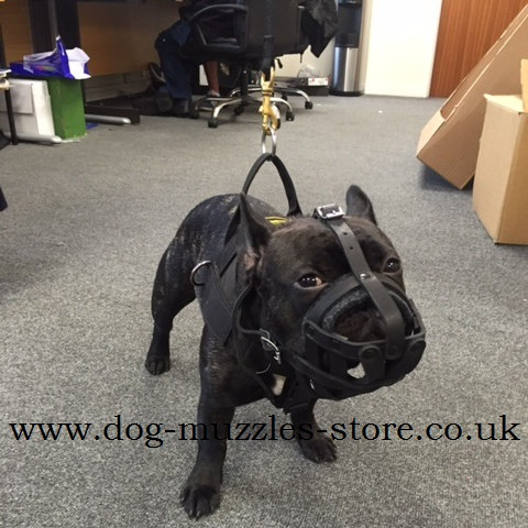 French Bulldog Soft Muzzle