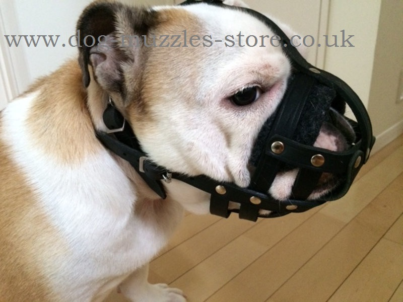 Soft Leather Muzzle For English Bulldog