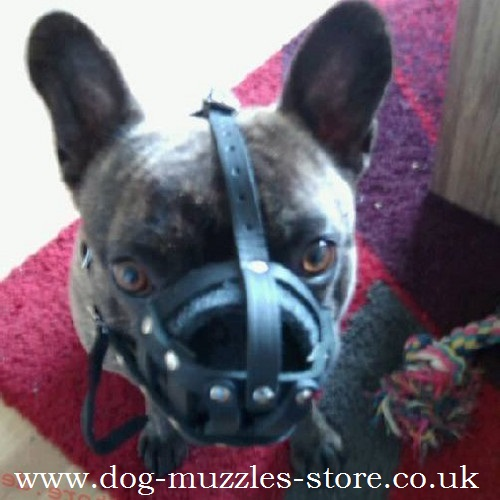 French Bulldog Muzzle Size