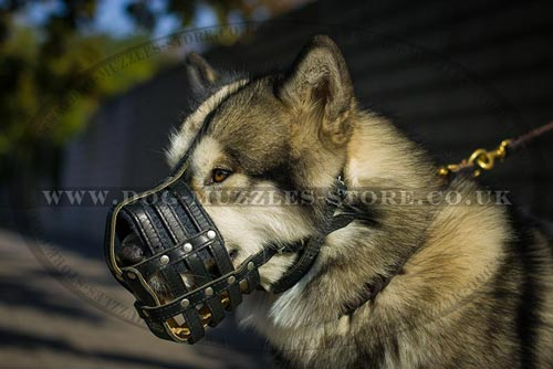 Leather Dog Muzzle for Husky and Malamute