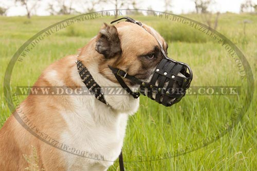 the best dog muzzle