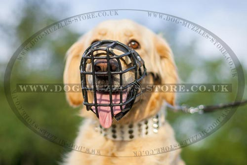 Best Muzzle for Golden Retriever