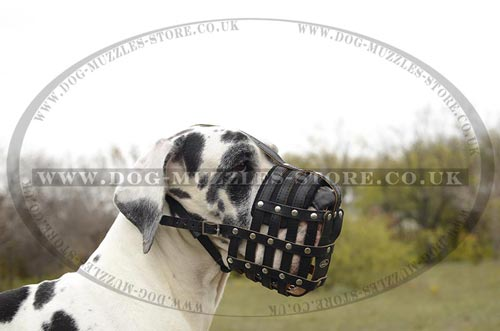 Big Dog Muzzle for Great Dane