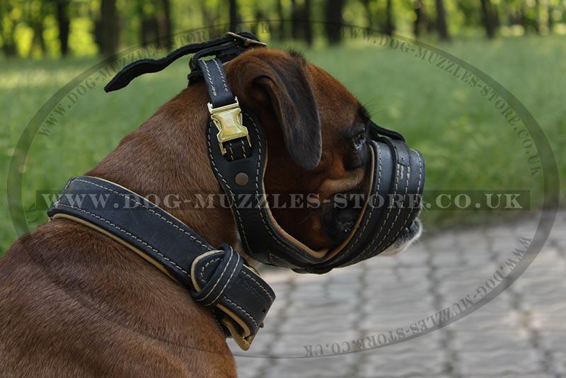 Best No Bite Dog Muzzles Uk