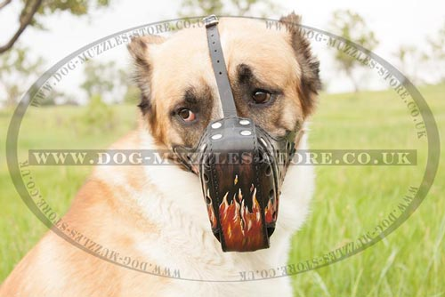 Strong Dog Muzzle for Large Alabai Dog