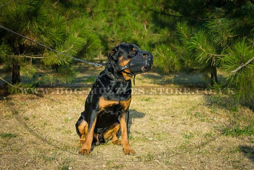K9 Rottweiler Muzzle for Police Dogs