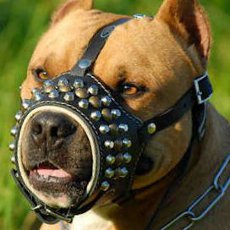Exclusive dog muzzle with brass studs