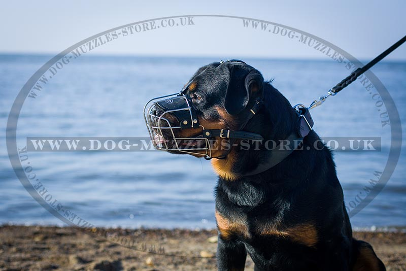 Wire Basket Muzzle For Rottweiler