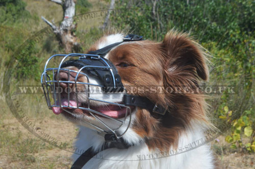 The Best Dog Muzzle for Australian Shepherd