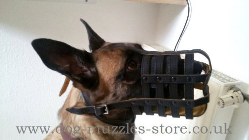 The Best Dog Muzzle for Belgian Malinois Muzzle Size