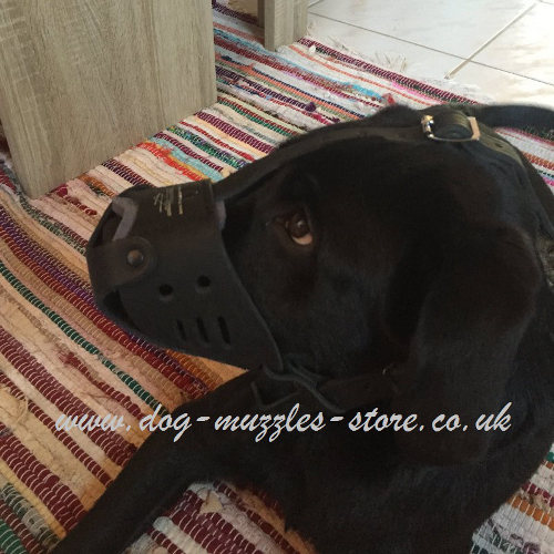 Leather Muzzle for Dogs Like Labrador