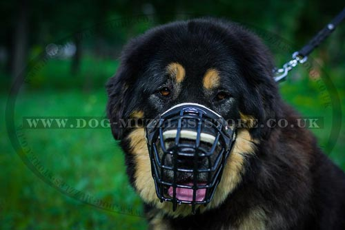 Tibetian Mastiff Muzzle for Large Dogs