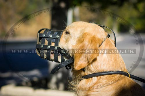 Golden Retriever Muzzle Size