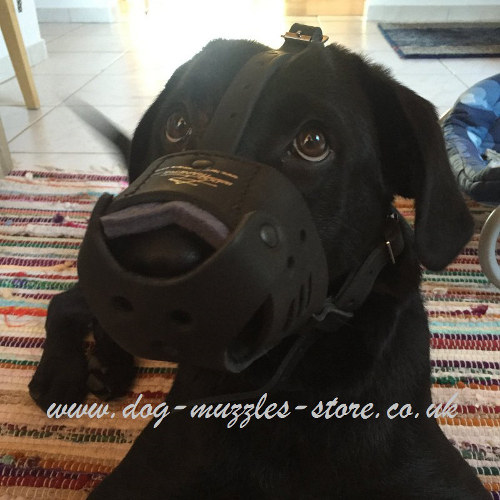 Leather Muzzle for Labrador Retriever