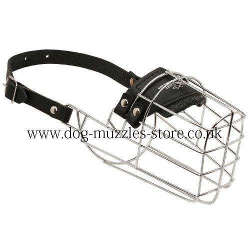 Collie Muzzle for Dogs